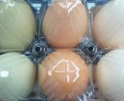 卵の宝石箱や〜